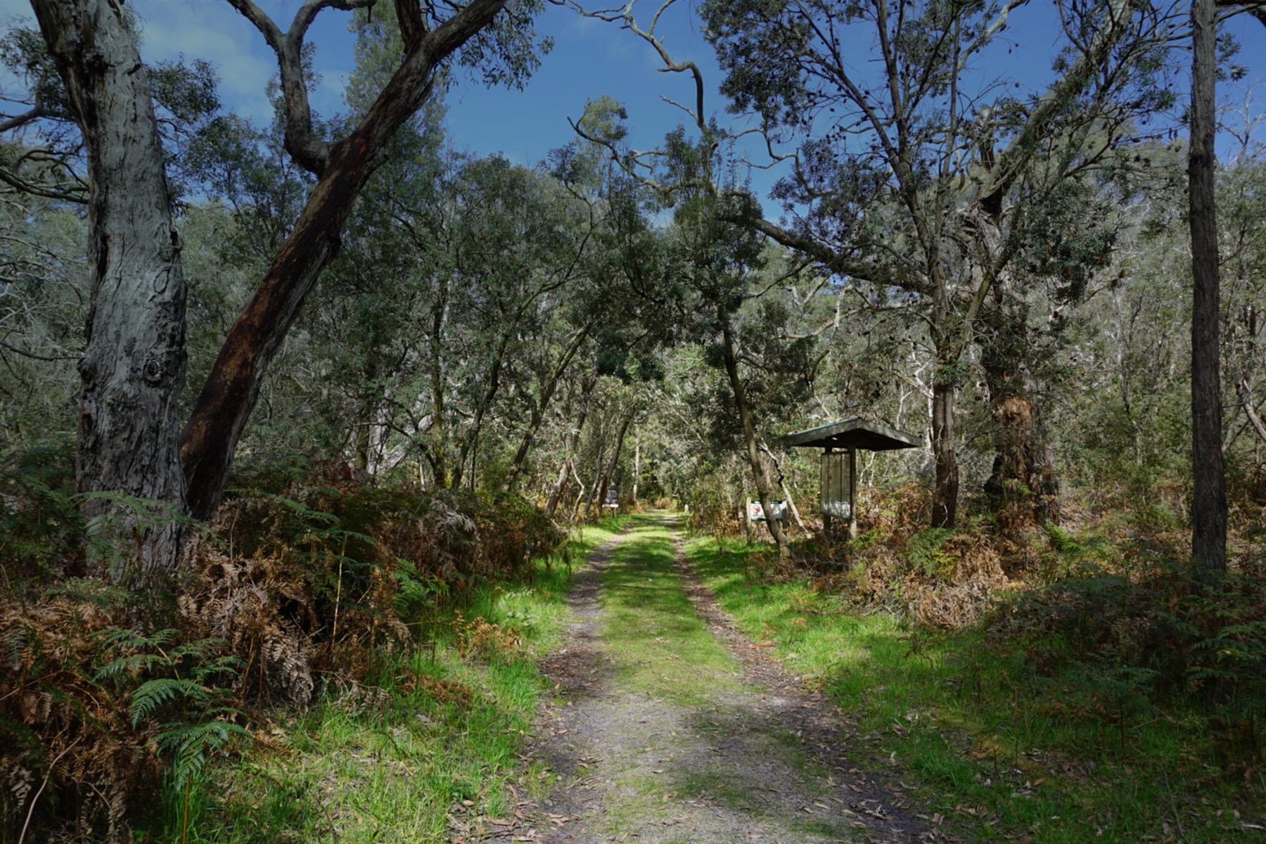 Green bush walk in the Mornington Peninsula